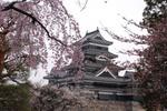 松本城.jpgのサムネール画像